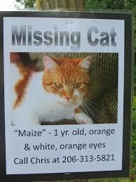 missing cat poster sample 11.41