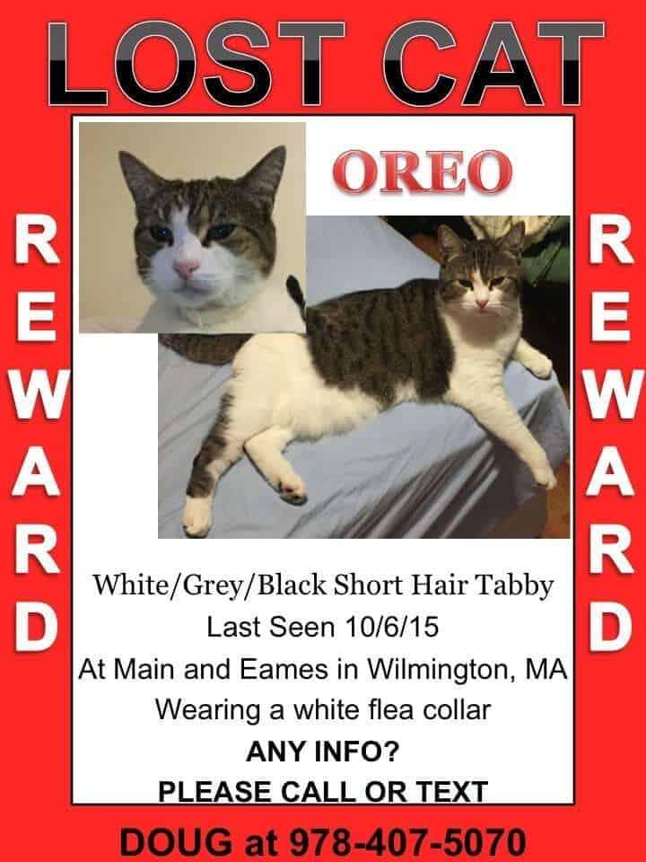 missing cat poster sample 15441