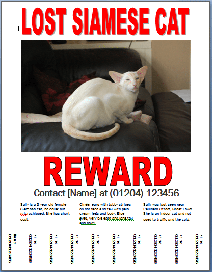 missing cat poster template 3641