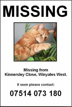 missing cat poster sample 12.641
