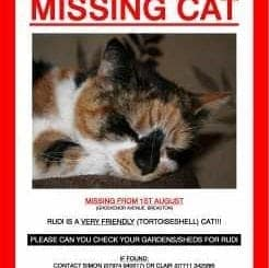 Free Printable Missing Cat Poster Template Archives Word