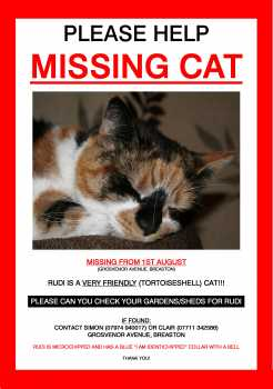 missing cat poster sample 3641