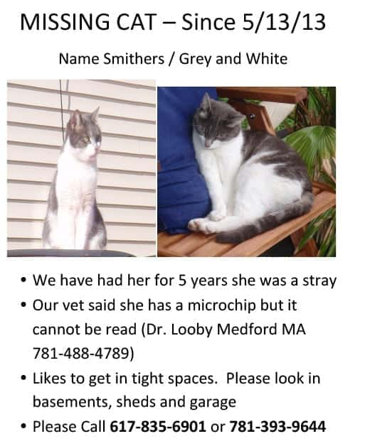Missing Cat Medford MA Smithers