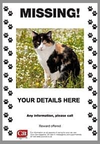 missing cat poster sample 8741
