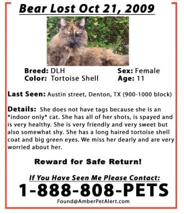 missing cat poster sample 9941